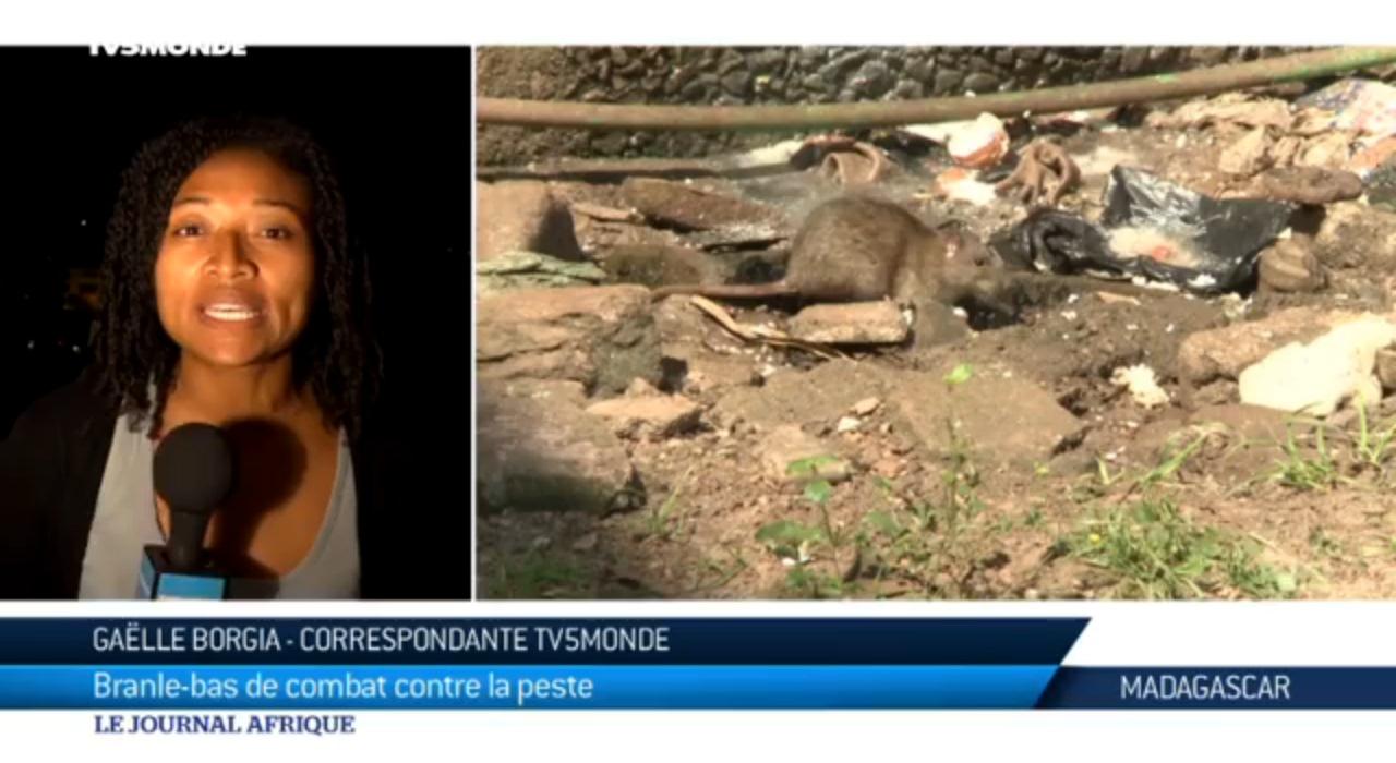 VIDEO. Voici le dernier bilan de la peste à Madagascar, selon TV5 Monde