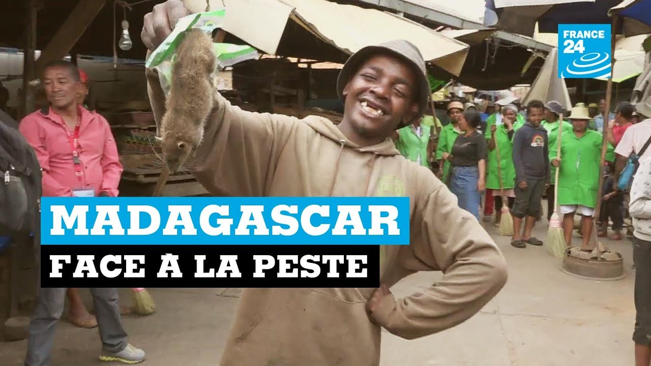 VIDEO. La guerre contre la peste s'annonce difficile, selon France 24